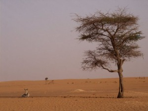 Barren-Africa-landscape.