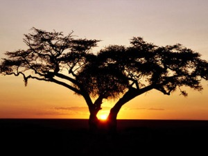 African-sunset-baobab-tree-silhouette