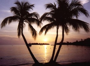 Jamaica-island-sunset-palm-trees