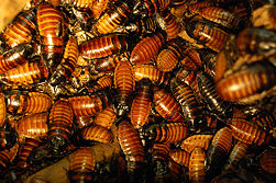 photo-swarm of-cockroaches-bugs-insects
