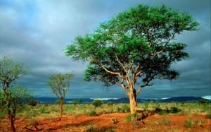 Africa-landscape-baobab-trees
