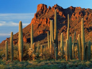 alamo_canyon_organ_pipe_cactus_national_monument_arizona