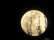 silhouette-of-tree-brancehs-against-moon