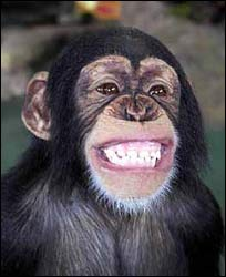smiling-chimpanzee