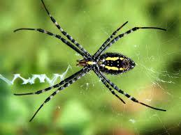 spider-weaving-web
