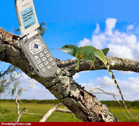 chameleon-with-cell-phone