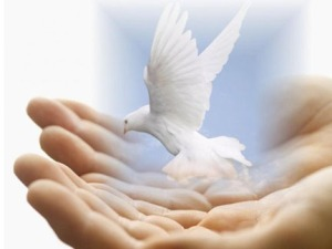 dove-in-caring-human-hands