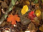 leaves-twigs
