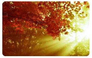 light-shining-though-trees