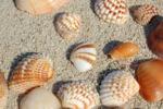 sand-sea-shells