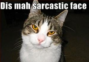 sarcastic-cat
