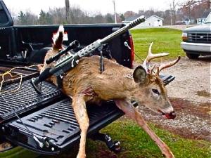 dead-deer