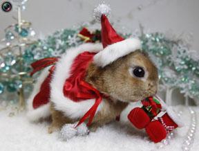 bunny-in-santa-costume