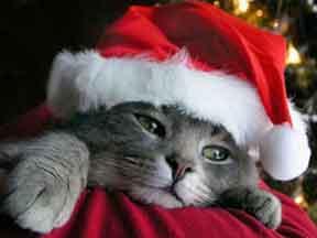 christmas-kitten
