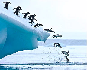 south-pole-penguins