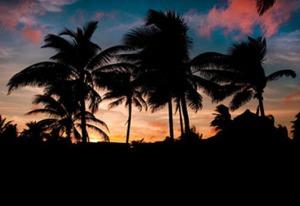 cuba-palm-tree-silhouettes