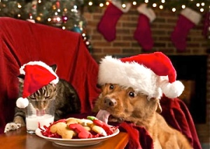 dog-and-cat-in-santa-hats