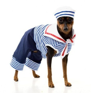dog-in-sailor-outfit