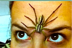 spider-on-woman's-forehead