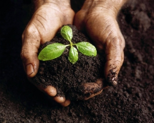 hands-holding-plant-in-soil