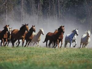 wild-horses-running-free