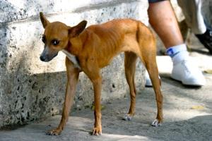 sylverblaque-skinny-dog-cuba