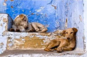 iran-stray-dogs