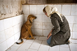 iranian-girl-with-stray-dog
