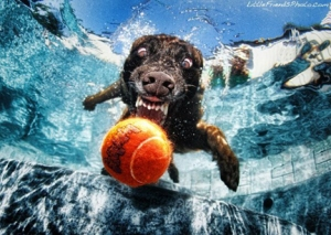 pets-underwater-dog-with-ball