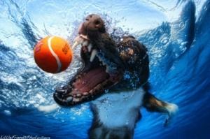 pets-underwater-dog