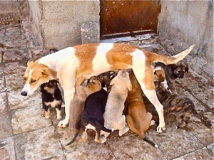 stray-dogs-iran