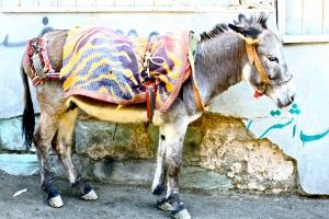 sylverblaque-iran-donkey