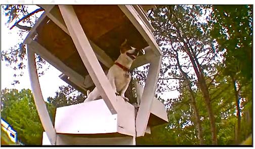 treetop-dog