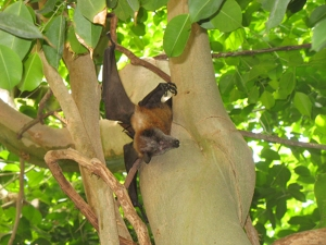bat-in-tree-branches