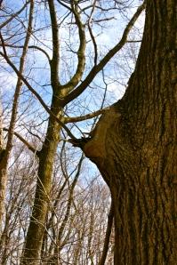 sylverblaque-tree-perch